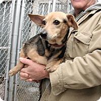 Adopt A Pet :: Martha - Aurora, IL