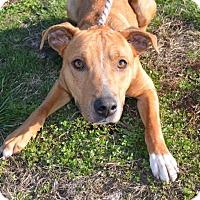 Adopt A Pet :: Mars - Trenton, MO