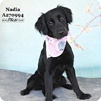 Adopt A Pet :: NADIA - Conroe, TX