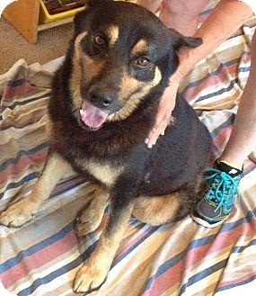 German Shepherd Dog Mix Dog for adoption in McKinney, Texas - Rocky - Courtesy Listing