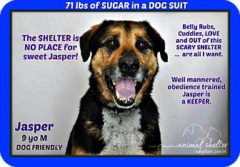 German Shepherd Dog Mix Dog for adoption in Wantagh, New York - Jasper