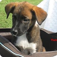 Adopt A Pet :: Thelma - Glastonbury, CT