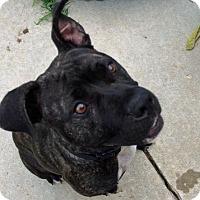 Adopt A Pet :: Lady - Troy, MI