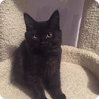 Adopt A Pet :: Bruno - Incline Village, NV