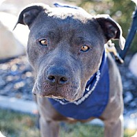 Adopt A Pet :: Nox - Salt Lake City, UT