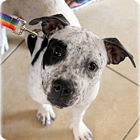 Adopt A Pet :: Sally - Ft. Lauderdale, FL