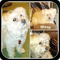 Adopt A Pet :: MISSY - Malvern, AR