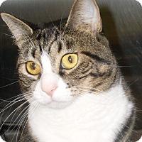 Adopt A Pet :: Brandi - Buhl, ID