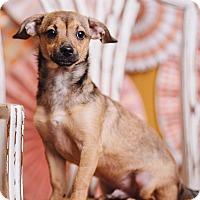 Adopt A Pet :: Cervantez - Portland, OR