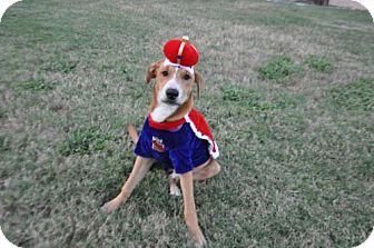 Labrador Retriever Mix Dog for adoption in Von Ormy, Texas - Bentley