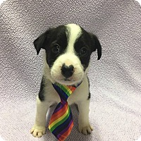 Adopt A Pet :: Skittles - Fort Atkinson, WI
