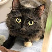 Adopt A Pet :: Jam - Ann Arbor, MI
