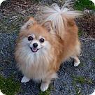 Adopt A Pet :: Sweetie Pie