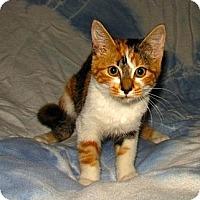 Adopt A Pet :: Eva - Norwich, NY