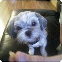 Adopt A Pet :: Lea - Hilliard, OH