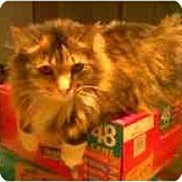 Adopt A Pet :: Suzi - Proctor, MN