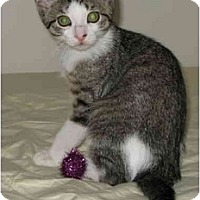 Adopt A Pet :: Penny's kittens - cincinnati, OH