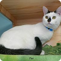 Adopt A Pet :: Taz - Dover, OH