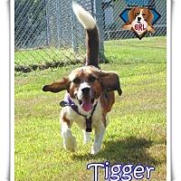 Adopt A Pet :: Tigger - Yardley, PA
