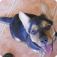 Adopt A Pet :: Latasha - dewey, AZ