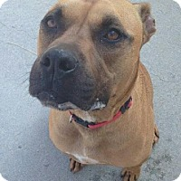 Adopt A Pet :: Bronson - Maryville, TN