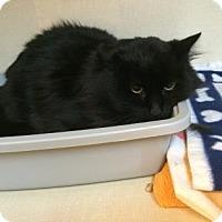 Adopt A Pet :: Duncan - Fort Collins, CO