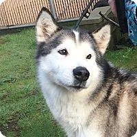 Adopt A Pet :: TESS - Seattle, WA