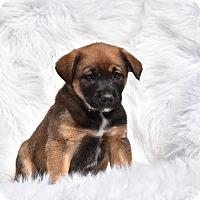 Adopt A Pet :: Regan - Groton, MA