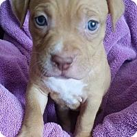 Adopt A Pet :: Dakota - Windermere, FL
