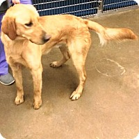 Adopt A Pet :: Charlie III - BIRMINGHAM, AL