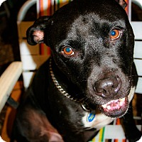 Adopt A Pet :: Rudy - Eugene, OR