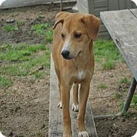 Adopt A Pet :: Lucy meet me 6/24 - Manchester, CT