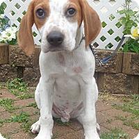 Adopt A Pet :: Wallop - West Chicago, IL