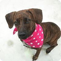 Adopt A Pet :: Dixie - Umatilla, FL