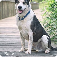 Adopt A Pet :: Rally - Webster, TX