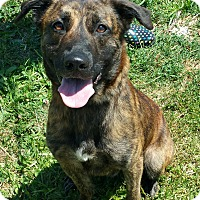 Adopt A Pet :: Boomer - Lisbon, OH