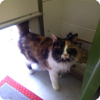 Adopt A Pet :: Fluffy - North Kingstown, RI