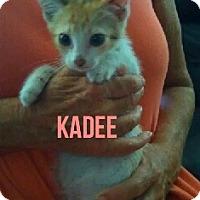 Adopt A Pet :: KADEE - Glendale, AZ