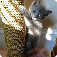 Adopt A Pet :: Anastasia & Annabelle - Maryville, TN