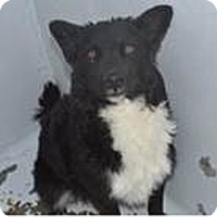 Adopt A Pet :: bc - Midvale, UT