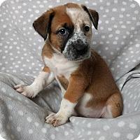 Adopt A Pet :: Judi Ann - Newport, KY