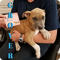 Adopt A Pet :: Grover - College Station, TX