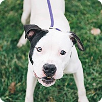 Adopt A Pet :: Hamish - Cleveland, OH