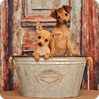 Adopt A Pet :: Janet (Left In Photo) - Las Vegas, NV