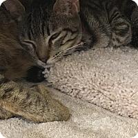 Adopt A Pet :: Wrigley - Vancouver, WA
