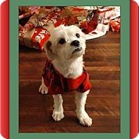 Adopt A Pet :: Adopted!!Fidget - IN - Tulsa, OK