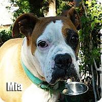 Adopt A Pet :: Mia - Encino, CA