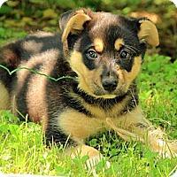 Adopt A Pet :: Rylee - Staunton, VA