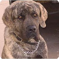 Adopt A Pet :: TRUCKER - Phoenix, AZ