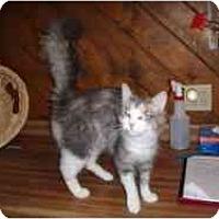 Adopt A Pet :: Phoebe - Hamburg, NY